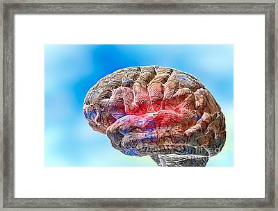 Human Brain Framed Print by Mike Agliolo