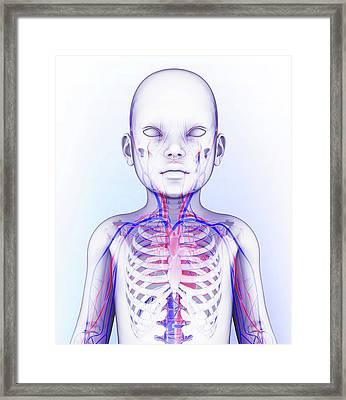Human Circulatory System Framed Print by Pixologicstudio