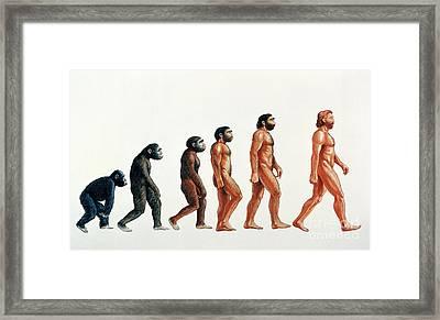 Human Evolution Framed Print by David Gifford