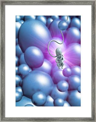 Human Fetus Framed Print by Victor Habbick Visions