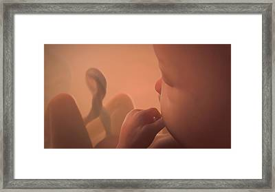 Human Foetus Framed Print by Thierry Berrod, Mona Lisa Production