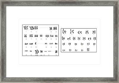 Human Genome Project Framed Print