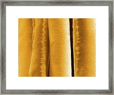 Human Hairs Framed Print