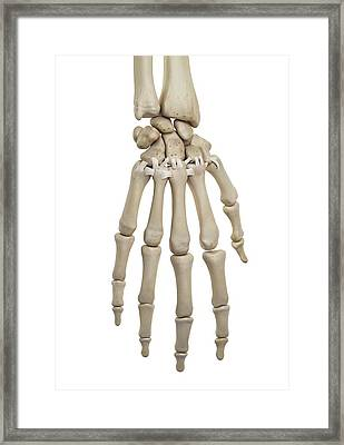 Human Hand Ligaments Framed Print by Sciepro