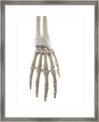 Human Hand Tendons Framed Print by Sciepro