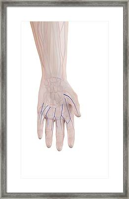 Human Hand Veins Framed Print by Sciepro