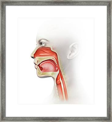 Human Head Anatomy Framed Print by Henning Dalhoff