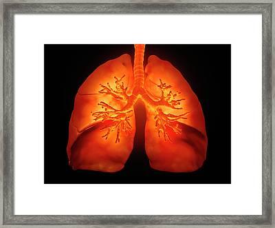 Human Lungs Framed Print by Andrzej Wojcicki