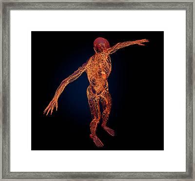 Human Lymphatic System Framed Print