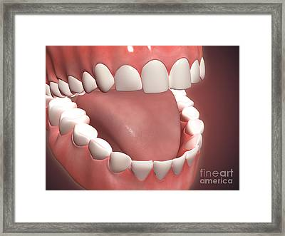 Human Mouth Open, Showing Teeth, Gums Framed Print by Stocktrek Images