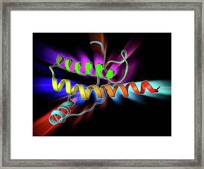 Human Prion Precursor Protein Framed Print by Laguna Design