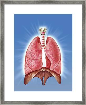 Human Respiratory System Framed Print by Harvinder Singh