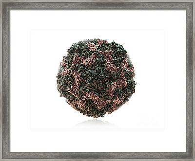 Human Rhinovirus Framed Print by Evan Oto