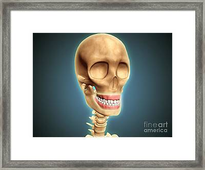Human Skeleton Showing Teeth And Gums Framed Print by Stocktrek Images