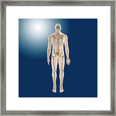 Human Skeleton Framed Print
