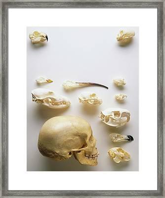 Human Skull And Animal Skulls Framed Print