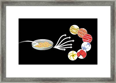 Human Stem Cells Framed Print