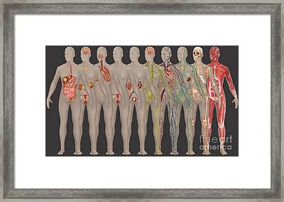Human Systems In The Female Anatomy Framed Print by Gwen Shockey