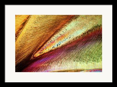 Microscopies Framed Prints