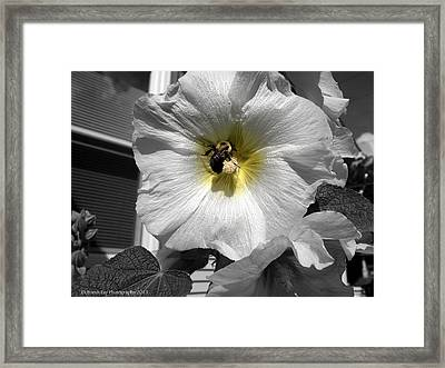 Framed Print featuring the photograph Humble Bumblebee by Deborah Fay