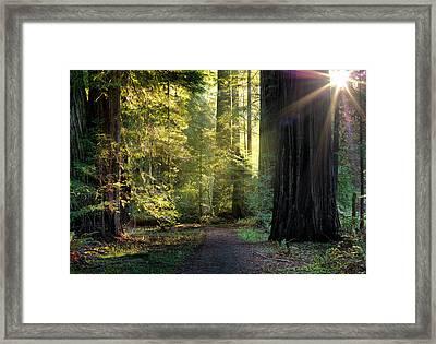 Humbolt Trail Framed Print by Leland D Howard