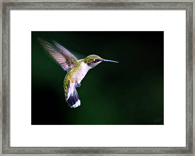 Hummer Ballet 2 Framed Print by ABeautifulSky Photography