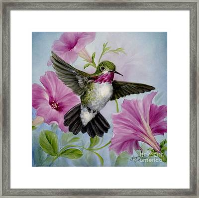 Hummer In Petunias Framed Print by Summer Celeste