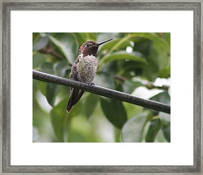 Hummer On A Wire Framed Print