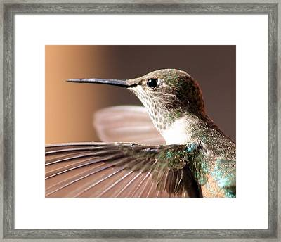 Hummer On The Wing Framed Print
