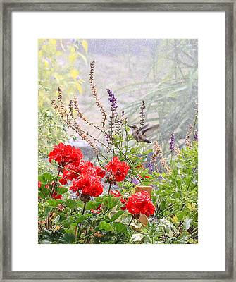 Hummer Shower Framed Print by Aaron Aldrich