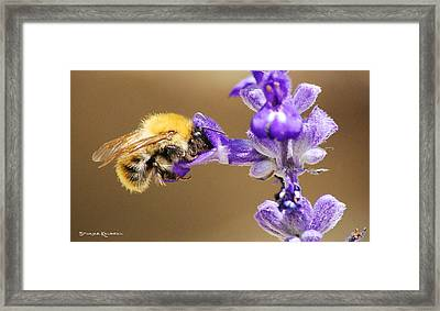 Framed Print featuring the photograph Humming Bee  by Stwayne Keubrick