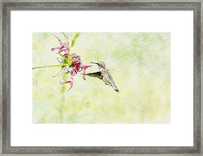 Humming Bird And Flower Framed Print