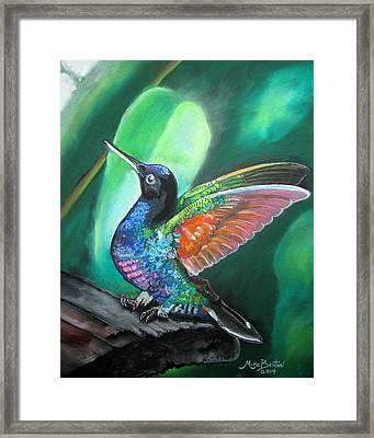 Humming Bird Framed Print