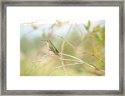 Humming Bird Perch Framed Print