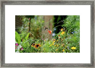Framed Print featuring the photograph Humming Bird by Thomas Woolworth