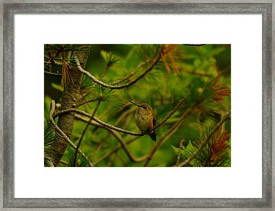 Humming Birds Perched  Framed Print