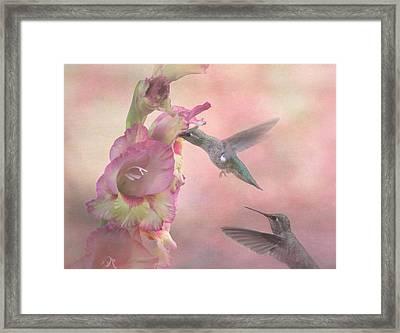 Humming Gladiola Framed Print by Angie Vogel