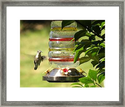 Framed Print featuring the photograph Hummingbird - 2 by Teresa Schomig