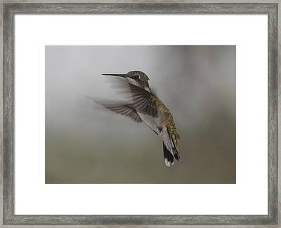 Framed Print featuring the photograph Hummingbird 6 by Leticia Latocki