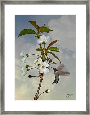 Hummingbird And Apple Blossom Framed Print by IM Spadecaller