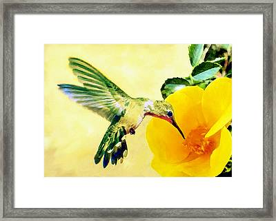 Hummingbird And California Poppy Framed Print