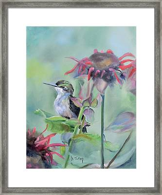 Hummingbird And Coneflowers Framed Print