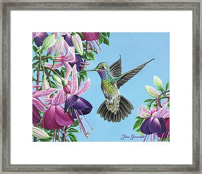 Framed Print featuring the painting Hummingbird And Fuchsias by Jane Girardot