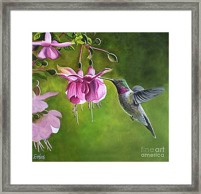 Hummingbird And Fuschia Framed Print