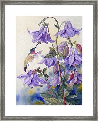 Hummingbird And Purple Columbine Framed Print by Janet  Zeh
