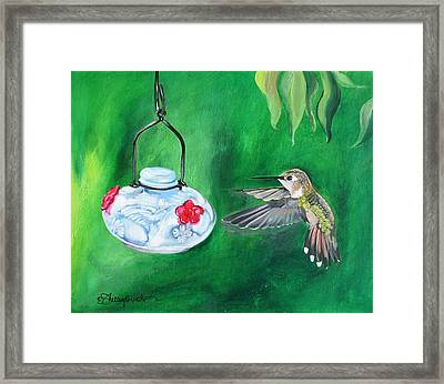 Hummingbird And The Feeder Framed Print