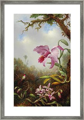 Hummingbird And Two Types Of Orchids Framed Print