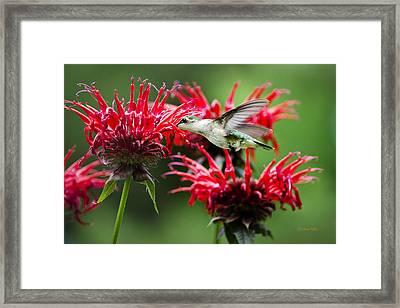 Hummingbird Angel Framed Print