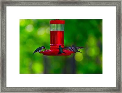 Hummingbird Art 392 Framed Print by Lawrence Hess