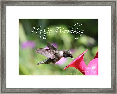 Hummingbird At Feeder Birthday Card Framed Print